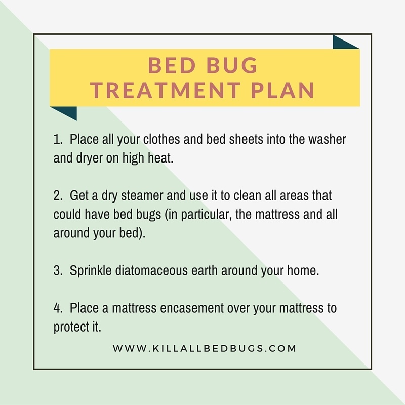 Bed Bug Extermination Plan